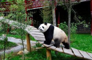 Γεννητούρια πάντα σε ζωολογικό κήπο του Τόκιο!