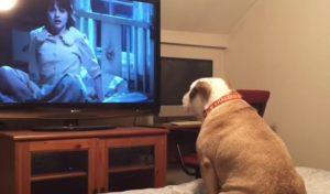 Σκύλος βλέπει θρίλερ και προειδοποιεί τους ήρωες να σωθούν! [vid]