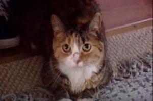 Θαρραλέα γάτα έσωσε 97χρονη από επίθεση πιτ μπουλ! [vid]