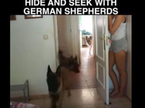Παίζει κρυφτό με τα σκυλιά της και αυτά δεν την βρίσκουν με τίποτα!