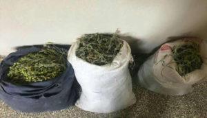 «Πόλεμος» για το τσάι στην ελληνοαλβανική μεθόριο! Κλέβουν τεράστιες ποσότητες