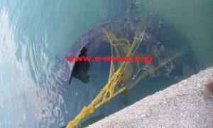 Κρήτη: Κοίταξε κάτω και είδε αυτόν τον καρχαρία μπλεγμένο στα δίχτυα του [pics]
