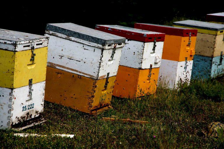 Λάρισα: Μέλισσες επιτέθηκαν σε πρόβατα και τα σκότωσαν! | Newsit.gr