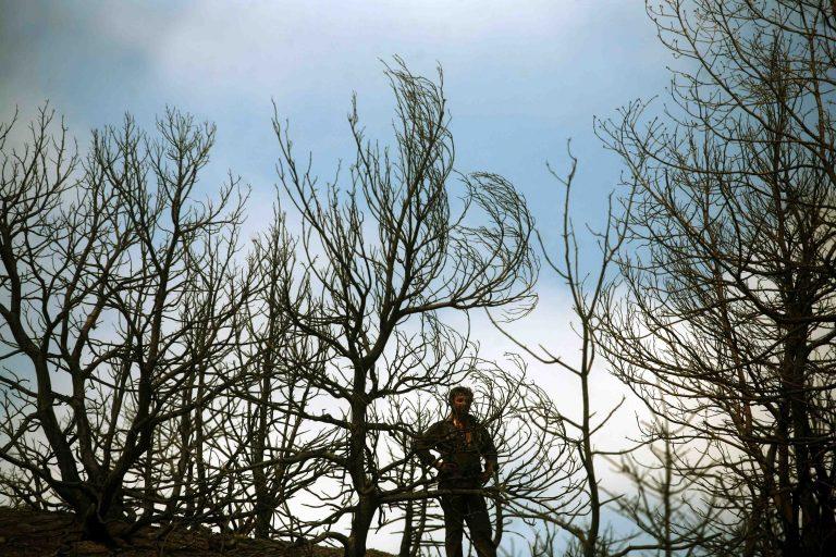 Σέρρες: Τραγωδία με θύμα ξυλοκόπο- Toν καταπλάκωσε δέντρο! | Newsit.gr