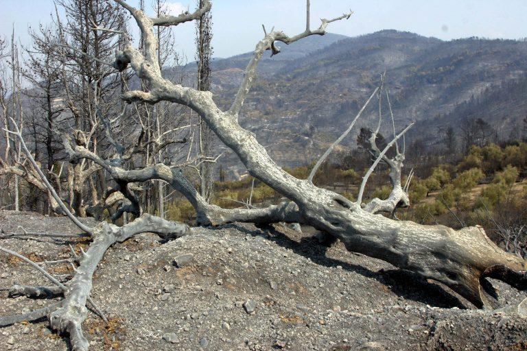 Ηλεία: Πρόταση-βόμβα του εισαγγελέα για τις φονικές πυρκαγιές του 2007! | Newsit.gr