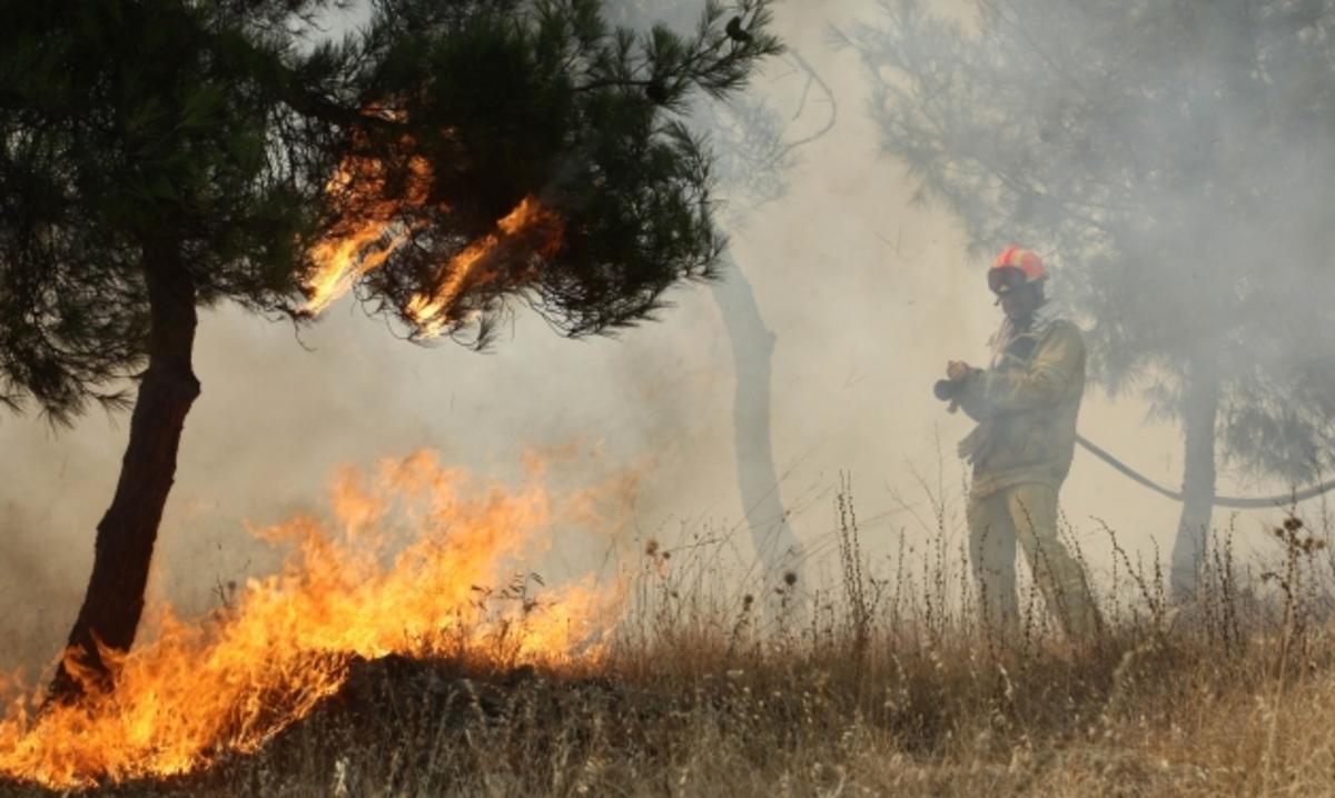 Ηλεία: Έβαλαν να κάψουν χορτάρια και… έκαψαν το δάσος! | Newsit.gr