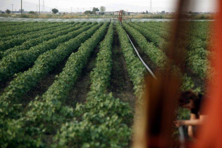 Λάρισα: Οι νέοι επιστρέφουν στα χωράφια λόγω κρίσης | Newsit.gr