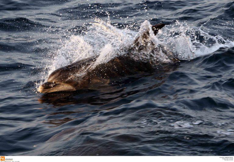 Άγιο Όρος: Ψαράς πυροβολούσε δελφίνια! | Newsit.gr