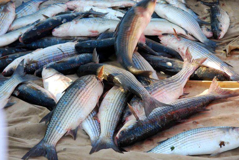 Χάρισε έναν τόνο ψάρια στους συμπολίτες του! | Newsit.gr