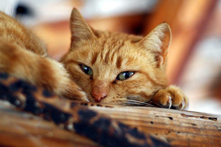 Τρίκαλα: Απέφυγε τη γάτα αλλά παρέσυρε πεζό! | Newsit.gr