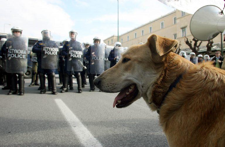 Αλεξανδρούπολη: Δουλέμπορος μαχαίρωσε αστυνομικό σκύλο που βοήθησε στη σύλληψή του | Newsit.gr