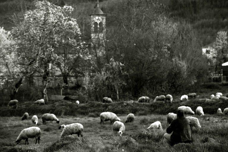 Κρήτη: Πυροβόλησαν κτηνοτρόφο που τους είδε να κλέβουν τα ζώα του! | Newsit.gr