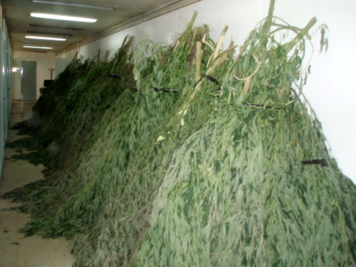 Κατερίνη: Καλλιεργούσε χασισόδεντρα στο σπίτι του! | Newsit.gr