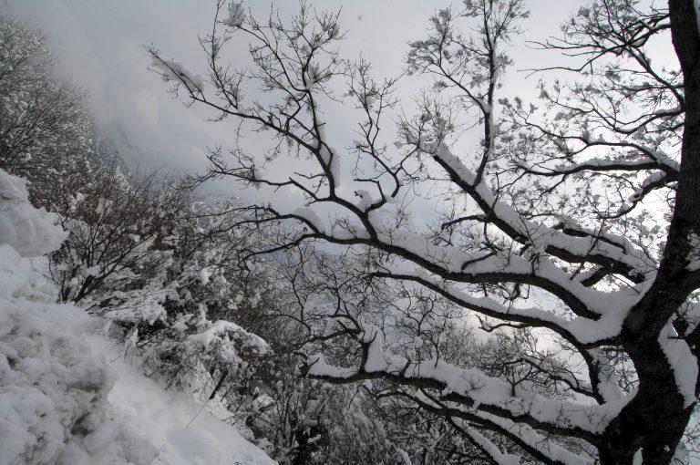 Τρίκαλα: Αποκλεισμένο παραμένει το Μυρόφυλλο | Newsit.gr