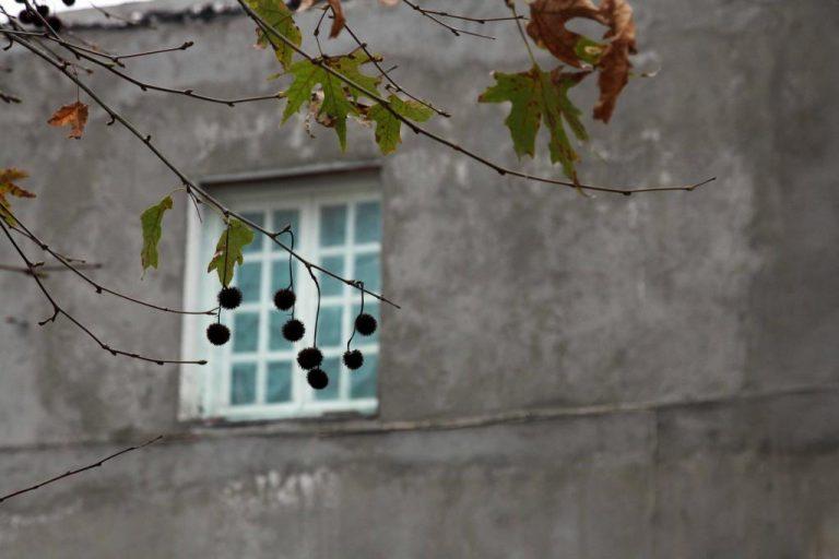 Χαλκίδα: Πήγε στο παράθυρο και άρχισε να ουρλιάζει βλέποντας τον φίλο του νεκρό! | Newsit.gr