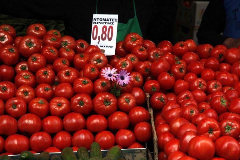 Τρία βασικά ζητήματα για την βιομηχανική ντομάτα | Newsit.gr