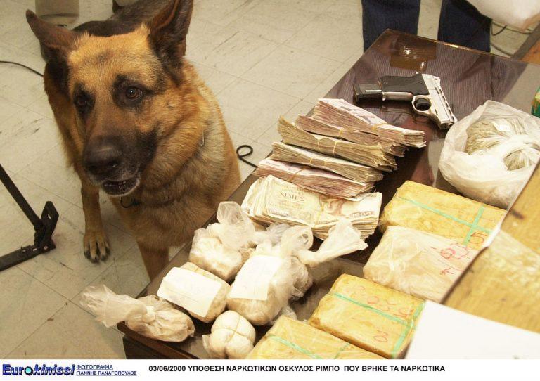 Ηγουμενίτσα: Ο σκύλος της αστυνομίας ξετρύπωσε το »ένοχο» μυστικό – Ο κρύος ιδρώτας που έλουσε τον οδηγό! | Newsit.gr