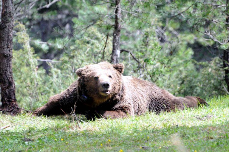 Οι αρκούδες ξυπνούν… «κακοδιάθετες» | Newsit.gr