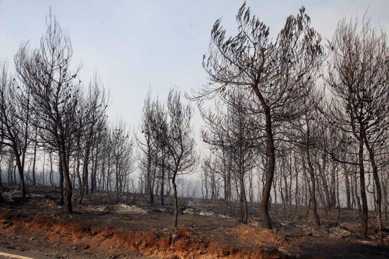 Χανιά: Υπό έλεγχο η φωτιά στην Κίσσαμο – Οι κάτοικοι μετρούν… »πληγές»!   Newsit.gr
