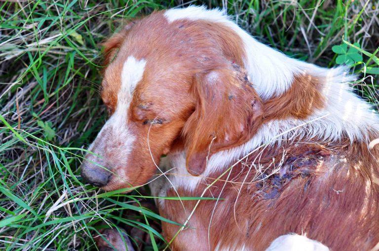 Γιάννενα: Εκτέλεσε σκύλο σε κεντρική πλατεία! | Newsit.gr