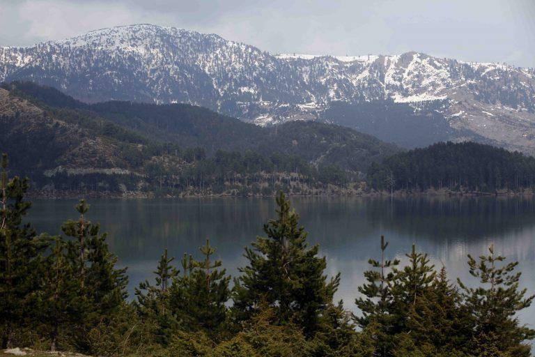 Λακωνία: »Στρατιωτικός νόμος» για την προστασία των δασών   Newsit.gr