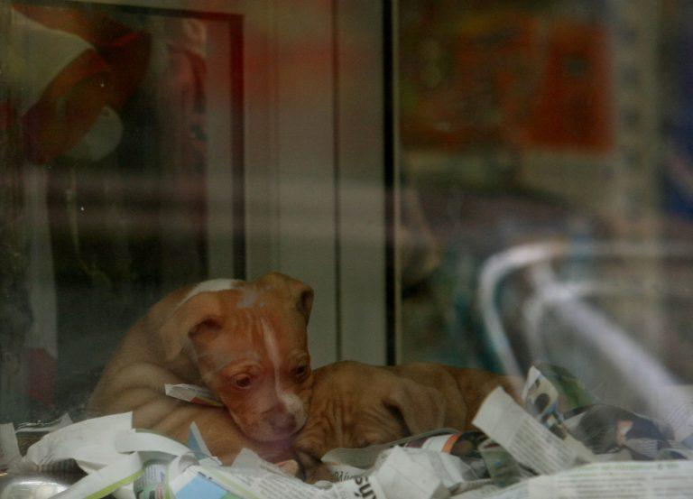 Λαμία: Σκότωσαν με φόλα αδέσποτο σκύλο, μέσα στο ΤΕΙ! | Newsit.gr