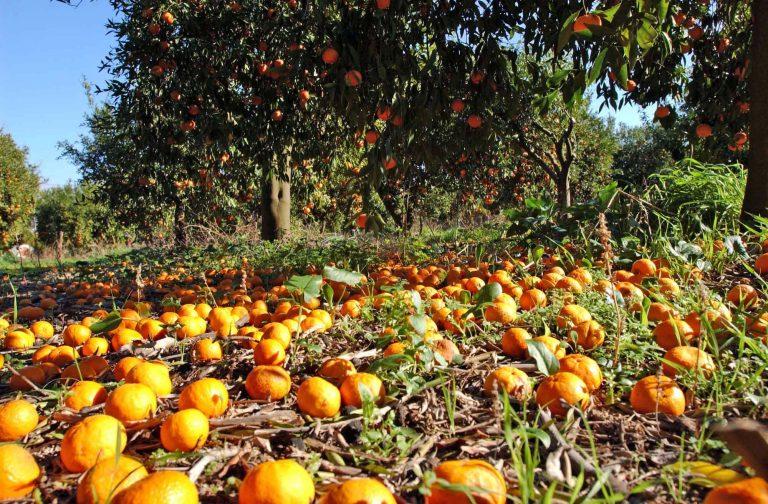 Ρόδος: H γιορτή πορτοκαλιού… συνεχίζεται! | Newsit.gr