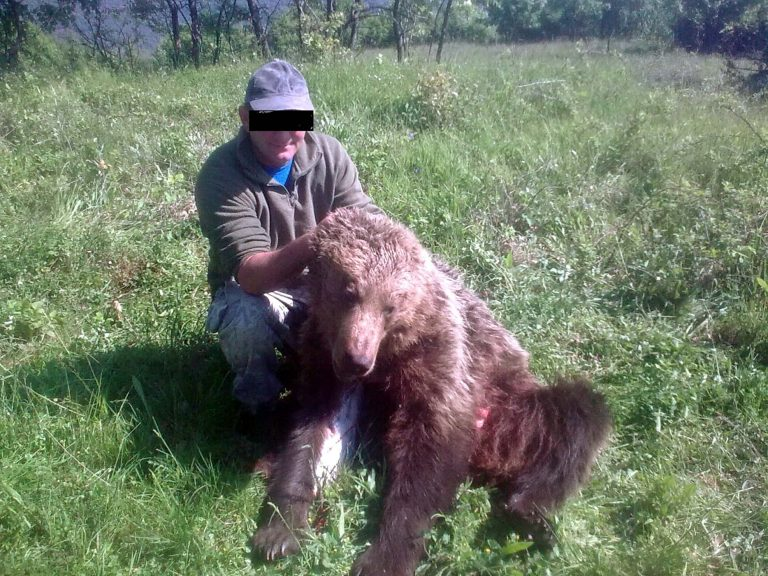 Βέροια: Η φωτογραφία της ντροπής – Πόζαρε με αρκούδα που σκότωσε! | Newsit.gr