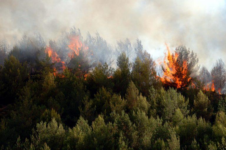 Φθιώτιδα: Ηλικιωμένος παραλίγο να κάψει τον Παρνασσό!   Newsit.gr