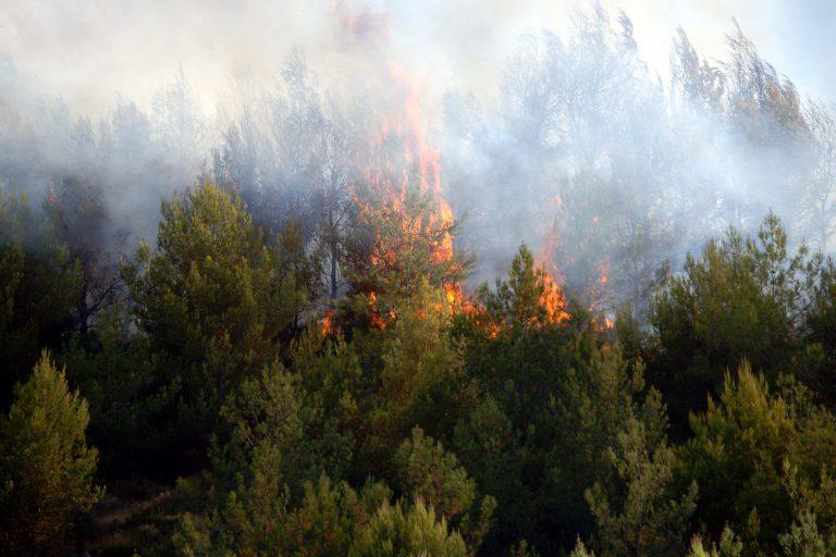 Πυρκαγιές σε εξέλιξη σε Μεσσηνία και Τρίκαλα | Newsit.gr
