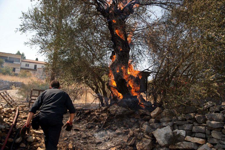 Λασίθι: Στις φλόγες στρέμματα με ελαιόδεντρα! | Newsit.gr