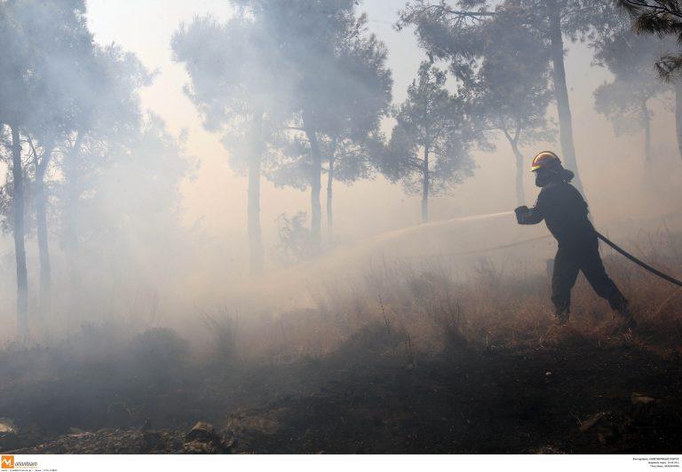 Δράμα: Σε εξέλιξη δασική φωτιά   Newsit.gr
