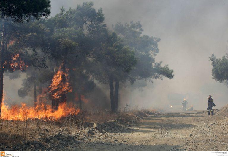 Ρόδος: Μεγάλη δασική φωτιά στα Πλατάνια | Newsit.gr