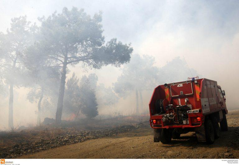 Εύβοια: Σε εξέλιξη μεγάλη φωτιά στην Ιστιαία – Στάχτη 500 στρέμματα δάσους! | Newsit.gr