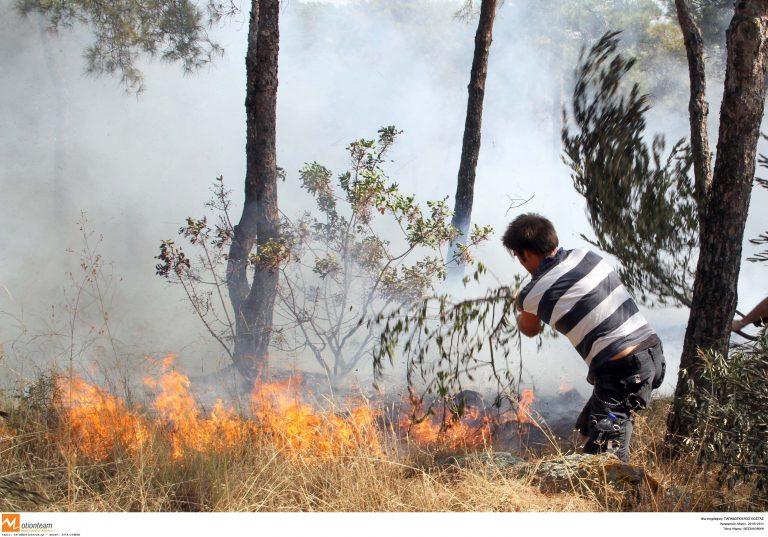 Σε εξέλιξη μεγάλη δασική πυρκαγιά στα Γιάννενα   Newsit.gr
