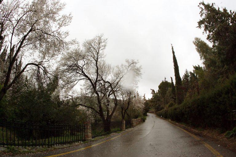 Ηράκλειο: Βρήκαν εκρηκτικά, ξεχασμένα στο δάσος | Newsit.gr
