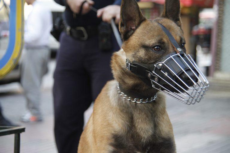 Μυτιλήνη:Πήγαν να του κόψουν το ρεύμα και αμόλησε τα λυκόσκυλα! | Newsit.gr