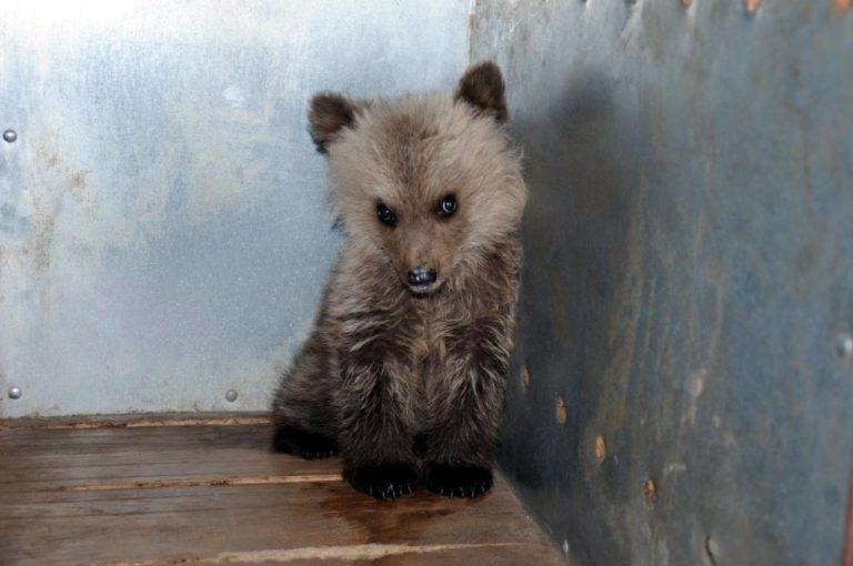 Θεσσαλονίκη: Αρκουδάκι «έσβησε» στην άσφαλτο μπροστά στα μάτια της μαμάς του | Newsit.gr