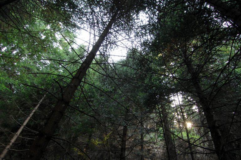 Αχαϊα: Πυροβολισμοί στο δάσος της Στροφυλιάς για ένα δέντρο! | Newsit.gr