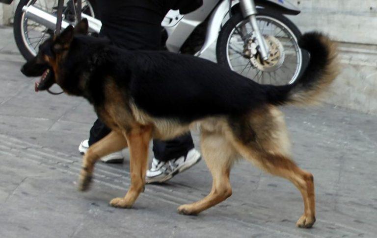 Χίος: Σκύλος έστειλε στο νοσοκομείο παιδάκι! | Newsit.gr