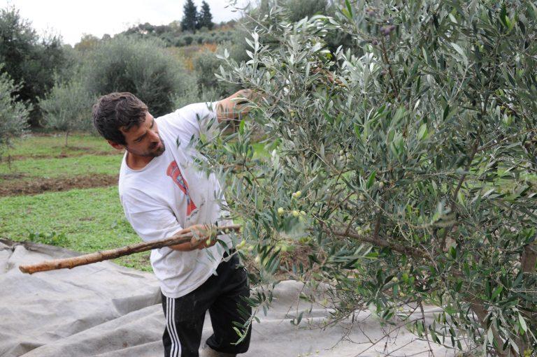 Ποιοί αγρότες εξαιρούνται από την έκτακτη ειδική εισφορά αλληλεγγύης   Newsit.gr