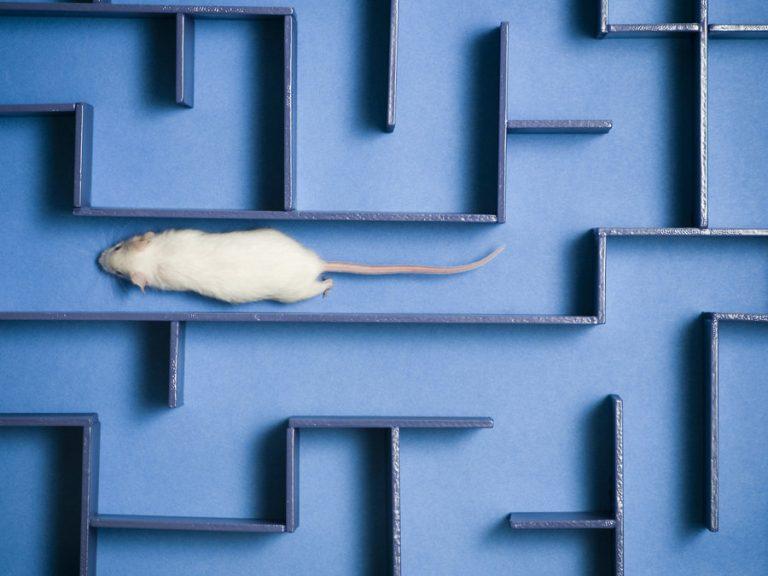 Βελτίωσαν την μνήμη ποντικιών με πρωτεΐνη από ανθρώπινο ομφάλιο λώρο!   Newsit.gr