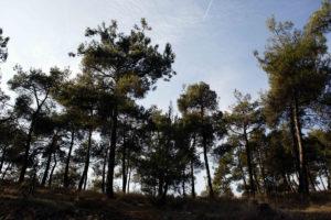 Θεσσαλονίκη: Στρατιωτικό βλήμα στο δάσος του Σέιχ Σου – Αναστάτωση στο σημείο!