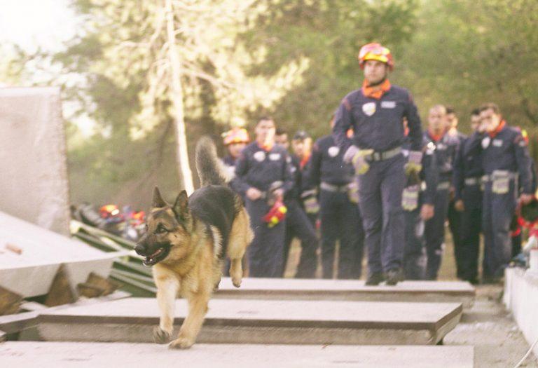 Κρήτη: Τη δάγκωσε εκπαιδευμένο λυκόσκυλο στην άσκηση για το τσουνάμι!   Newsit.gr