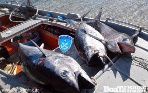 Εύβοια: Η χαρά των ψαράδων για τους τόνους και τον ξιφία που έπιασαν δεν κράτησε πολύ [pics]