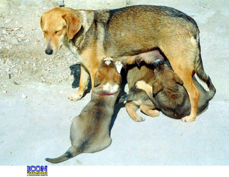Ηλεία: Οι κλέφτες βούτηξαν μέχρι τη σκύλα με τα κουτάβια της! | Newsit.gr