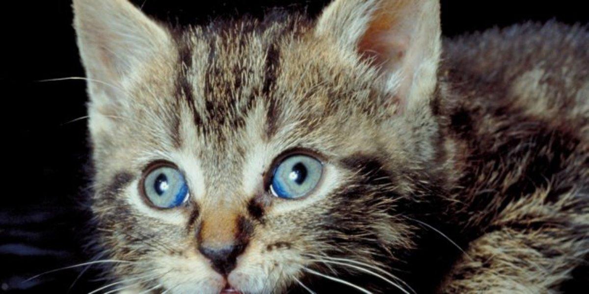 Ηράκλειο: Επιχείρηση για να απεγκλωβιστεί από ταράτσα, έγκυος γάτα!   Newsit.gr