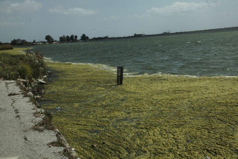 Αιτωλικό: Πράσινη η λιμνοθάλασσα – Αυτές είναι οι εικόνες που αντίκρυσαν κάτοικοι της περιοχής [pics] | Newsit.gr