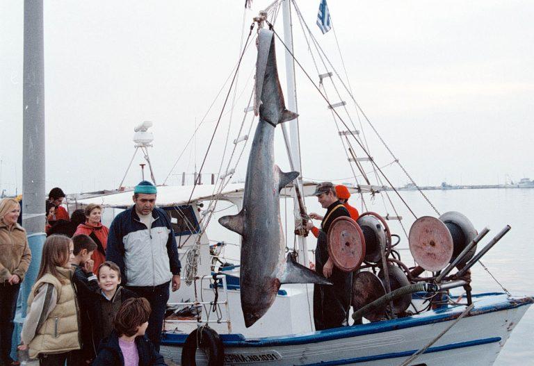 Ψάρεψαν λευκό καρχαρία στα Χανιά! | Newsit.gr