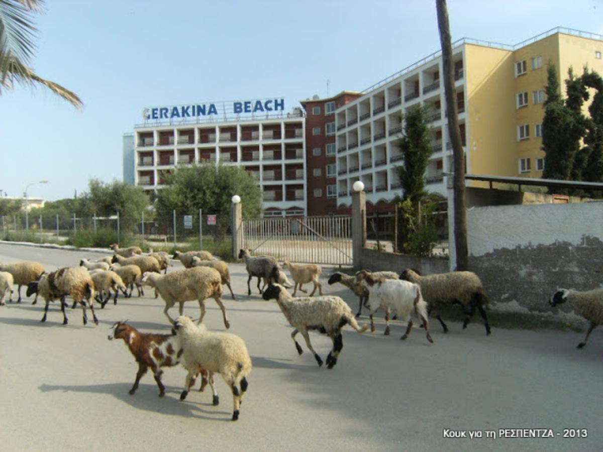 Χαλκιδική: Πού νομίζετε ότι βόσκουν αυτά τα πρόβατα; – Δείτε φωτό! | Newsit.gr